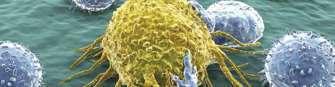 t-cell