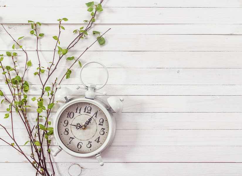Molecular clock marking the growth of the plant root identified
