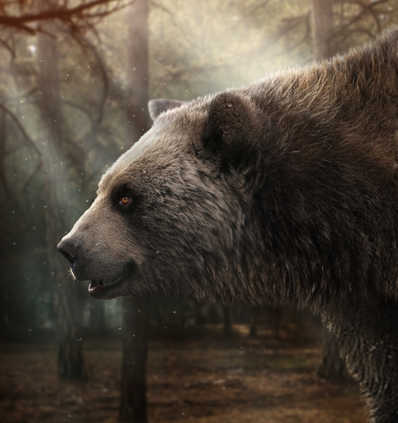 First Occurrence of the Short-faced Giant Bear Found in Italy