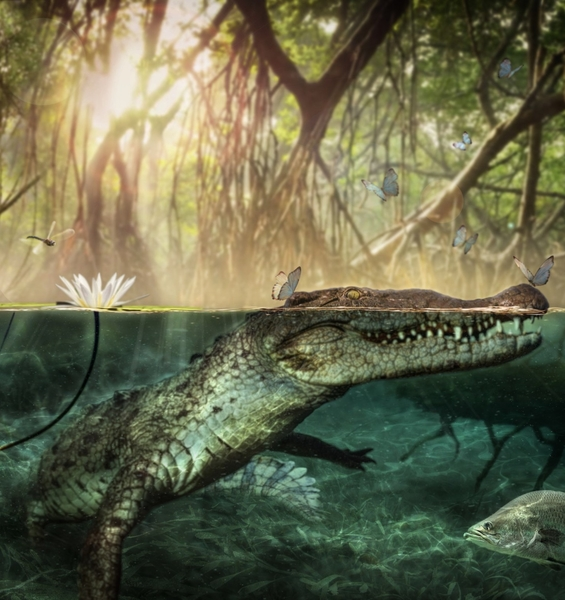 Seven million years ago the African crocodile crossed the Atlantic and colonised the New World