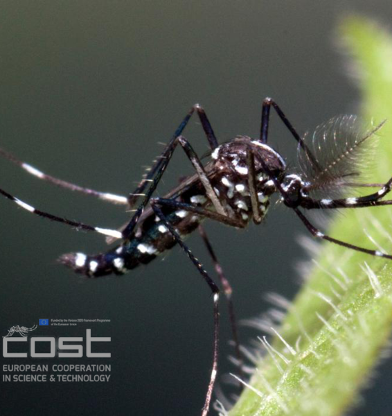 The First European AIM – COST Project Addressing the Invasive Mosquito Emergency